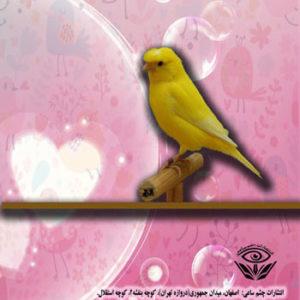 کتاب مبین کوچولو و مرغ عشق هایش نوشته معصومه حسینی و مبین کرمی