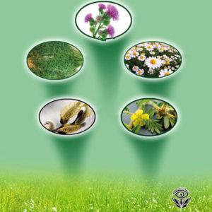 کتاب گیاه درمانی انواع زخم ها - نوشته پژوهشگر الهام سادات سلجوقیان